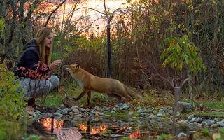 Cele mai frumoase roșcate: 60 de imagini care dovedesc că vulpile sunt animale minunate