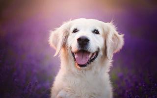 Viață de câine fericit: 30 de imagini pe care și pisicile le invidiază
