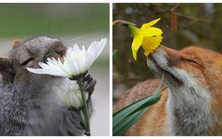 Nu numai oamenii iubesc florile, ci și animalele. 20 de imagini care îți vor topi sufletul
