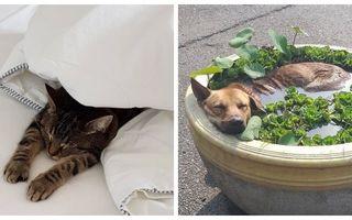 Vine weekendul! Aceste animale îți vor da o lecție atunci când vine vorba de relaxare