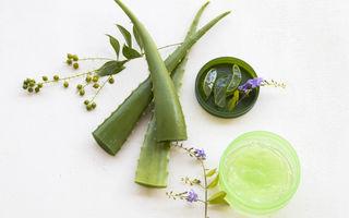 Preparate naturiste din Aloe vera. 4 rețete simple pentru piele, păr și corp