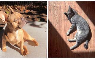 Animalele se bucură de soare la fel ca și oamenii, dacă nu chiar mai mult. 30 de imagini haioase