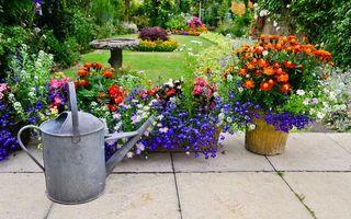10 plante iubitoare de soare care alungă țânțarii și insectele dăunătoare