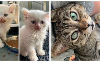 Ziua Pisicuțelor: Cum decurge o zi din viața lor în 20 de imagini haioase