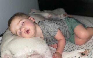 Moment adorabil surprins de cameră: Un băiețel de doi ani a coborât din pat ca să doarmă pe podea cu câinele