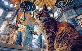 Regina și castelul său: Pisica Gli locuiește permanent în Hagia Sofia din Istanbul și are mii de fani