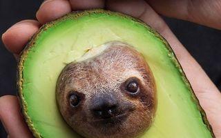 Atenție, animale modificate artistic! 50 de imagini care te vor surprinde