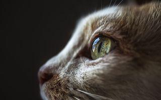 Ziua Internaţională a Pisicii: 30 de imagini adorabile cu cele mai răsfățate animale