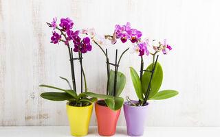 Cum se udă orhideele? Cea mai bună metodă