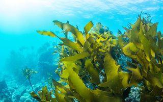 10 beneficii mai puțin știute pe care le au algele marine