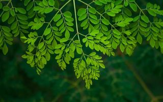 Ești lipsită de energie? Planta care îți redă puterea de a face orice!