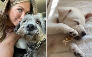 15 vedete care au adoptat animale: Le-au luat de pe stradă și din adăposturi