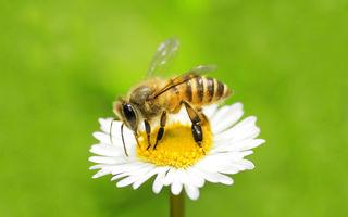 Ce înseamnă când visezi albine