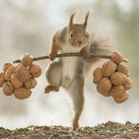 Veverițele ridica greutați: Imaginile suprarealiste surprinse intr-o padure din Suedia
