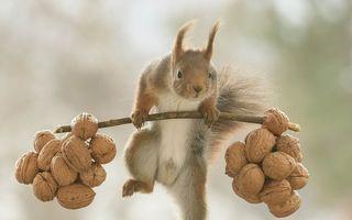 Veverițele ridică greutăți: Imaginile suprarealiste surprinse într-o pădure din Suedia