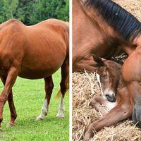 16 animale a căror durată de gestație o să te surprindă
