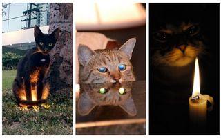 Îngeri și demoni. 50 de pisici care te vor speria fără voia lor!