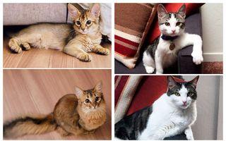 De ieri și de azi: Cum arată pisicile când sunt pui și cum arată când cresc