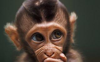 Toate vietățile Pământului: 45 de imagini copleșitoare din concursul foto #Animals2020
