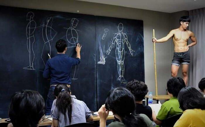 profesor anatomie