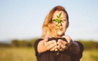 Planta cu o mie de resurse! Tot ce trebuie să știi despre extractul din cânepă
