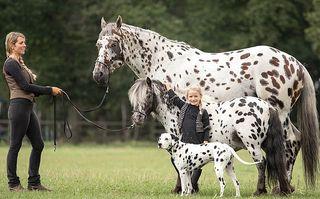 """Echipa de șoc: Cum e să ai un cal, un ponei şi un câine care arată ca în """"101 dalmațieni"""""""