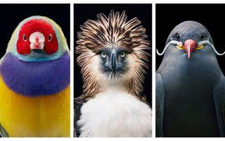 Portrete de înaripate: 23 de păsări rare, așa cum nu le-ai mai văzut