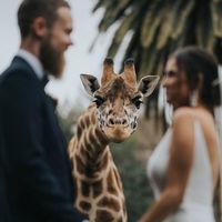 Cele mai bune fotografii de nunta din 2020. 30 de imagini spectaculoase