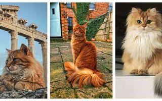 Pisicile supermodel. 50 de imagini care demonstrează că micile feline știu să pozeze