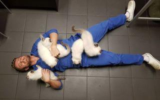 Terapie cu pisici. 40 de imagini care te vor înduioșa