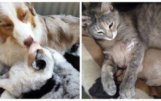 Ce înseamnă să fii mamă! 20 de imagini cu animale care ne dau o lecție de viață