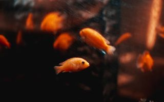 6 sfaturi pentru configurarea unui nou acvariu