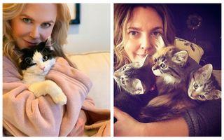 30 de vedete care iubesc pisicile: Imaginile adorabile pe care lumea trebuie să le vadă