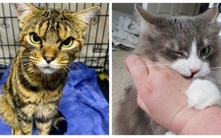 Pisicile care au uitat că ar trebui să fie drăguțe. 20 de imagini haioase