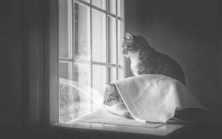 Pisici la fereastră: O colecție de imagini irezistibile