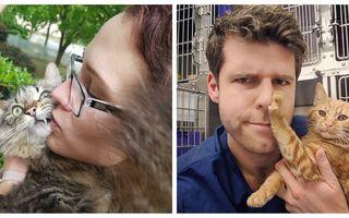 Pisicile care nu vor să fie alintate. 40 de imagini extrem de amuzante