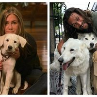 30 de vedete care iubesc cainii: Imaginile cu care au topit inimile fanilor