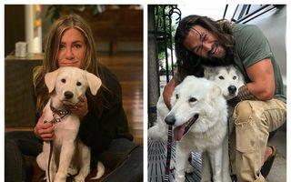 30 de vedete care iubesc câinii: Imaginile cu care au topit inimile fanilor