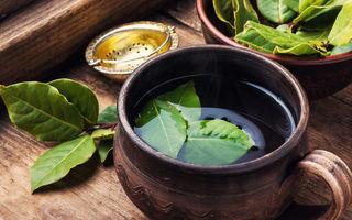 Ceai de dafin: când îl poți consuma și ce beneficii îți poate aduce