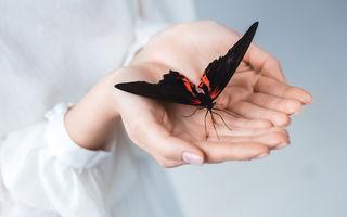 Ce înseamnă când visezi fluture