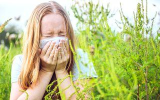 Alergie la ambrozie: cauze, simptome, tratament și prevenție