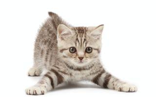 Cum să îngrijești o pisică: ghid pentru începători