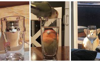 Totul pare distorsionat după un pahar! 20 de imagini hilare cu animale