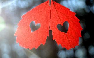 Horoscopul dragostei pentru luna noiembrie. Berbecul nu trebuie să se grăbească