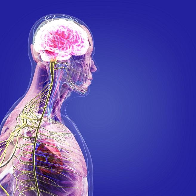 Ce este prostata si ce rol are in organism